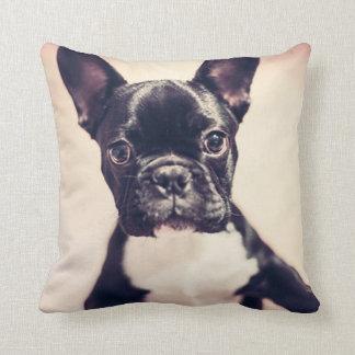 /Dog Cushions