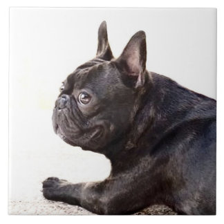 French Bulldog Tile