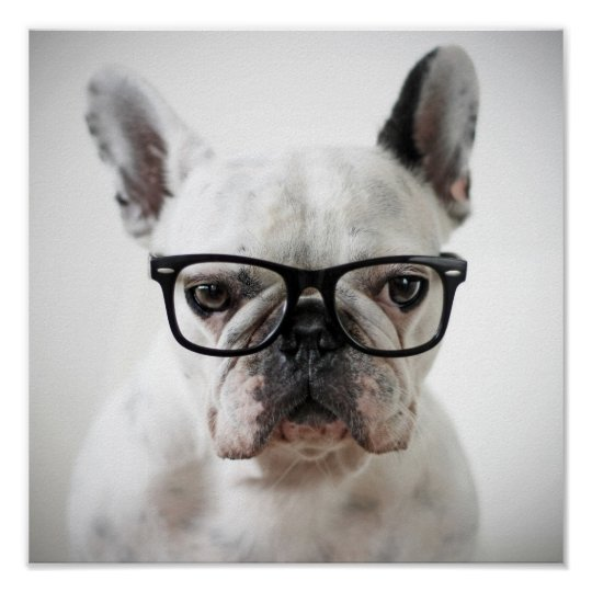 French Bulldog Wearing Black Eye Glasses Poster