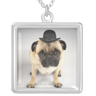 French bulldog wearing bowler, studio shot silver plated necklace