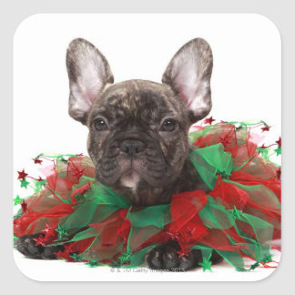 French bulldog wearing Christmas collar Square Stickers