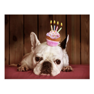 French Bulldog With Birthday Cupcake Postcard