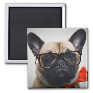 French Bulldog With Glasses And Bow Tie Magnet