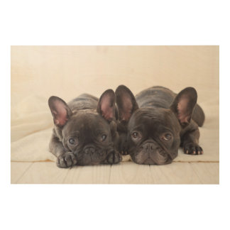 French Bulldogs Snuggling On A Blanket Wood Wall Decor