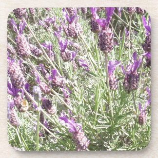 French Lavender Flowers Coasters