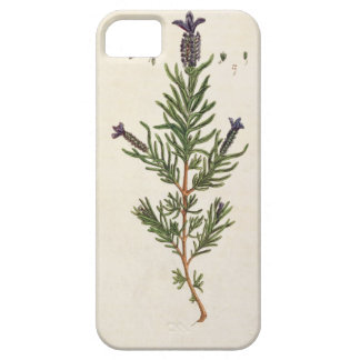 French Lavender, plate 241 from 'A Curious Herbal' Case For The iPhone 5
