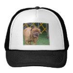 French Mastiff Dog Mesh Hats