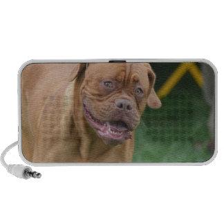 French Mastiff Dog Speaker System