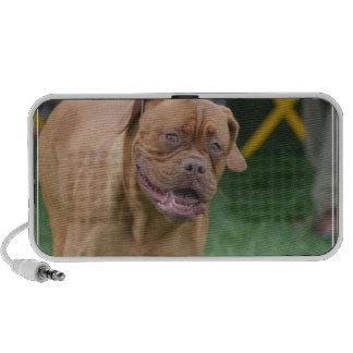 French Mastiff Dog iPhone Speakers