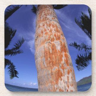 French Polynesia, Bora Bora, Palm trees Drink Coaster