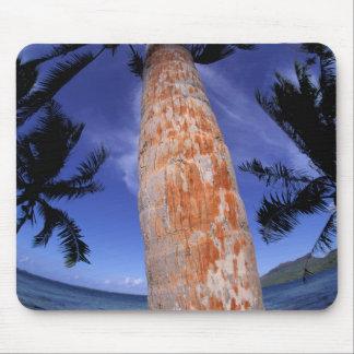 French Polynesia, Bora Bora, Palm trees Mouse Pad