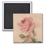 French Victorian Pink Rose Square Magnet