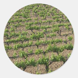 French Vineyard Classic Round Sticker