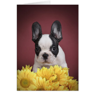 Frenchie - French bulldog puppy Card