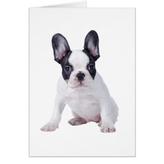 Frenchie - French bulldog puppy Card
