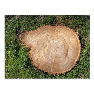 Fresh cut tree stump postcard