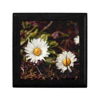 Fresh Daisy flowers Keepsake Box