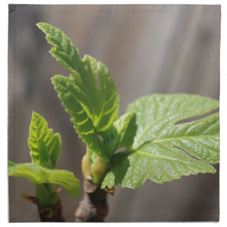 Fresh Fig Leaf Napkins