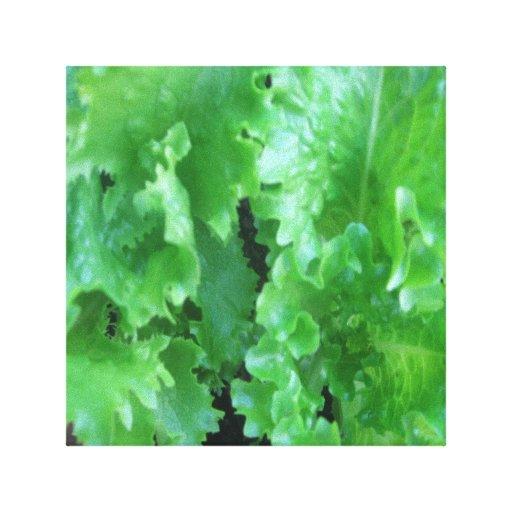 Fresh Food-Lettuce Gallery Wrap Canvas