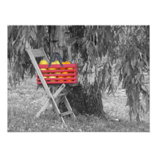Fresh Fruit by Leslie Peppers Photographic Print