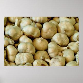 Fresh garlic Photo Poster