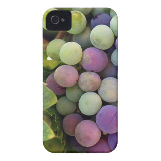 Fresh Grapes and Wine Case-Mate iPhone 4 Cases