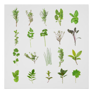 Fresh herbal list of most common used herbs home poster