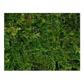 Fresh Moss Postcard