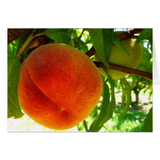 Fresh Ripe Peach Card