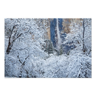 Fresh snowfall in the trees below Bridalveil Photo Print
