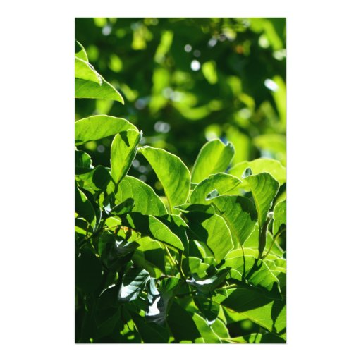 Fresh spring green leaves. nature photography. flyers