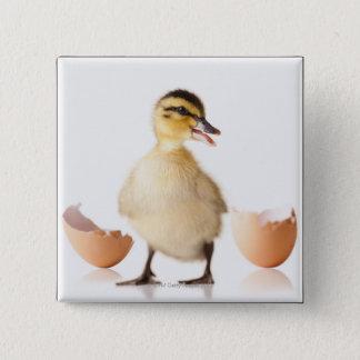 Freshly hatched chick beside broken egg shell 15 cm square badge