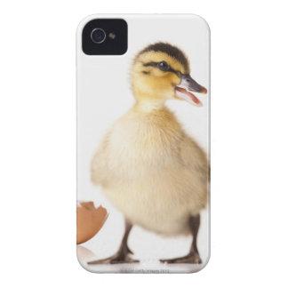 Freshly hatched chick beside broken egg shell Case-Mate iPhone 4 case