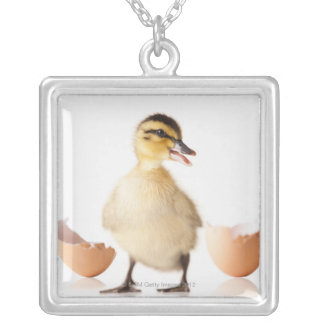 Freshly hatched chick beside broken egg shell silver plated necklace