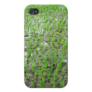 Freshly Planted Rice iPhone 4/4S Cases