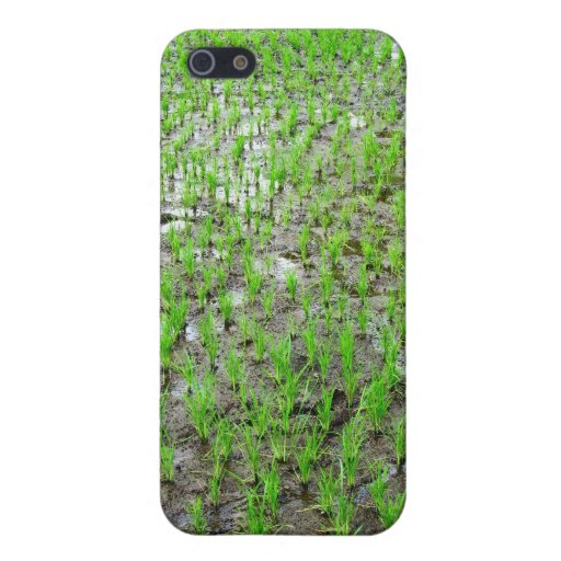 Freshly Planted Rice Covers For iPhone 5