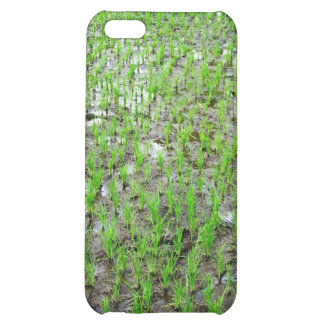 Freshly Planted Rice iPhone 5C Covers