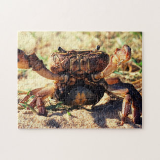 Freshwater Crab Observing, Durban Jigsaw Puzzle