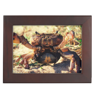 Freshwater Crab Observing, Durban Keepsake Box