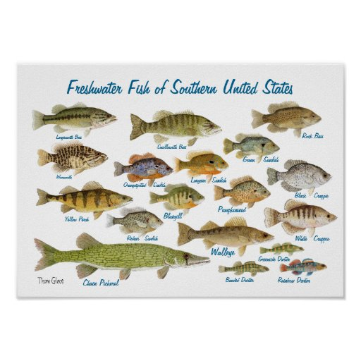 Freshwater Fish of Southern United States Poster
