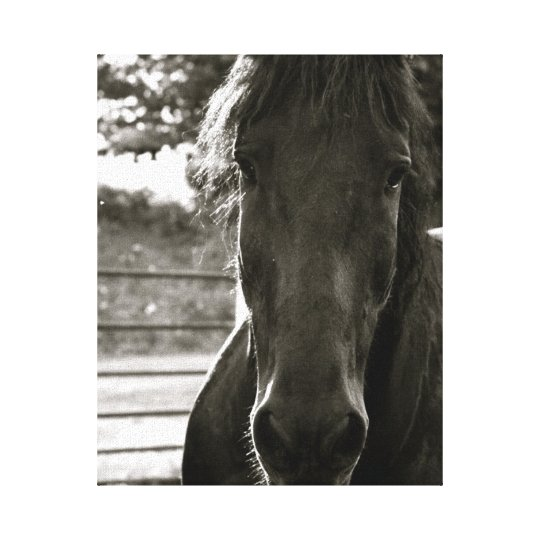 Fresian Horse Photo Canvas Print