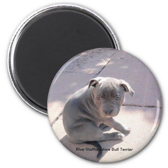 Fridge magnet of Blue Staffordshire Bull Terrier