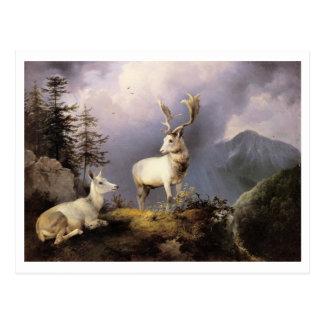 Friedrich Gauermann - Damwild (Fallow Deer), 1833 Postcard