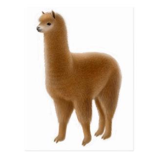 Friendly Brown Alpaca Postcard