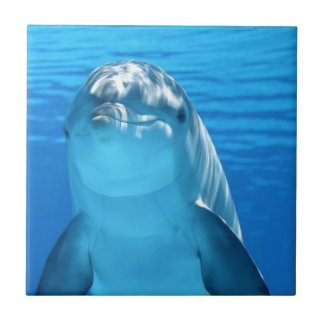 Friendly Dolphin Photo Tile