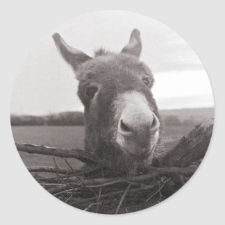 Friendly Donkey - Vintage Photo Classic Round Sticker