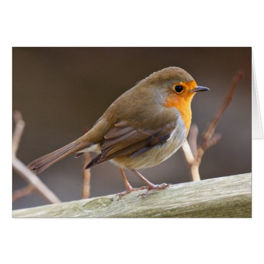 Friendly European Robin Card