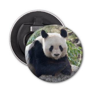 Friendly Giant Panda