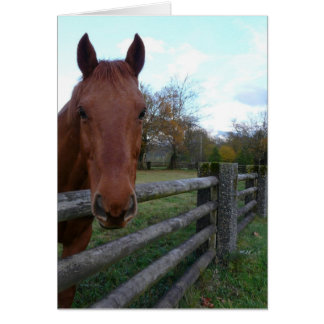 Friendly Horse by the Fence Greeting Card