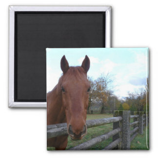Friendly Horse by the Fence Refrigerator Magnets